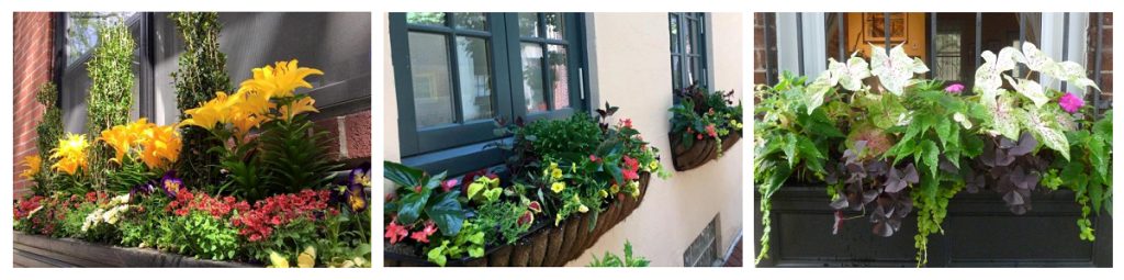 Window Box Design & Installation Banner - Earthly Delights