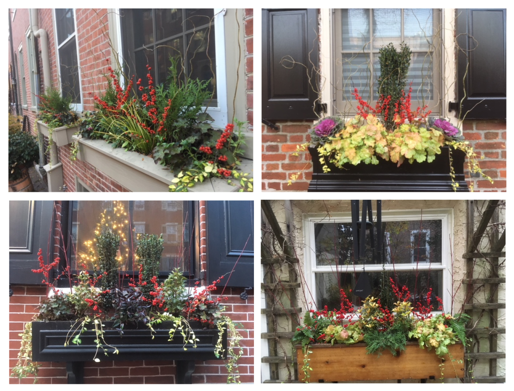 Window Box Designs for Winter - Earthly Delights Urban Gardens - Philadelphia PA