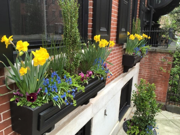Earthly Delights Garden Design Philadelphia - Window Box Design and Installation