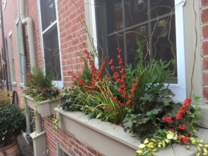 Earthly Delights Garden Design Philadelphia - Winter Window Box Design and Installation